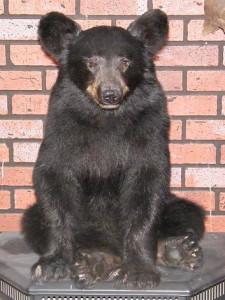 Bear_A
