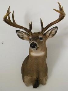 Deer_A