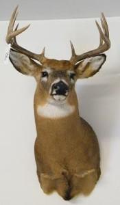 Deer_B