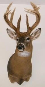 Deer_C