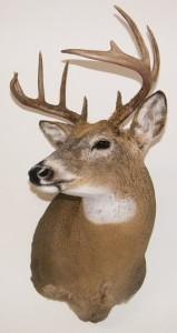 Deer_D