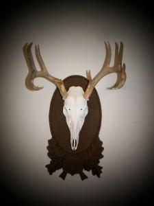 EU_deer_spot
